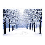 Winter Scene Holiday Cards
