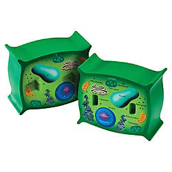 Learning Resources Plant Cell Cross Section