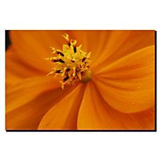Trademark Global Orange Flower Gallery Wrapped
