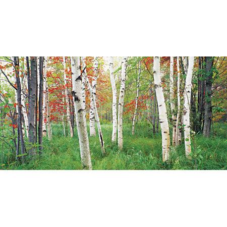 Biggies wall mural 40 x 80 aspen grove by office depot for Aspen wall mural