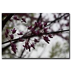 Trademark Global Purple Bloom Gallery Wrapped