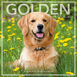 Landmark Golden Retrievers Monthly Wall Calendar