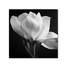 Trademark Global Gardenia Gallery Wrapped Canvas