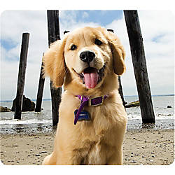 Fellowes Recycled Mouse Pad Puppy at
