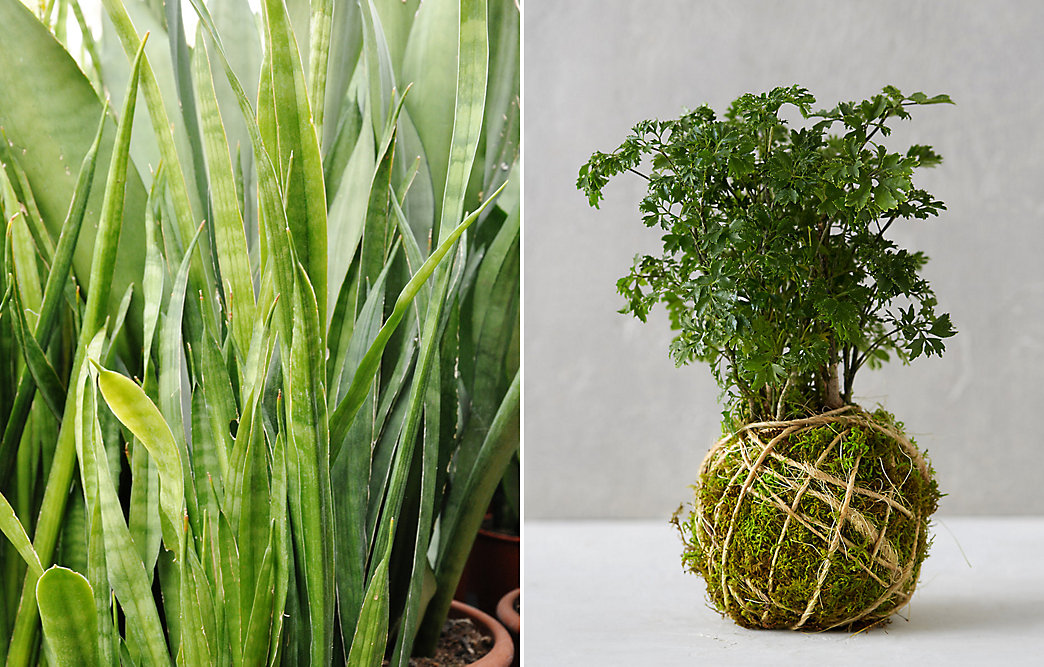 Low light plants for winter at home the blog at terrain - Small house plants low light ...