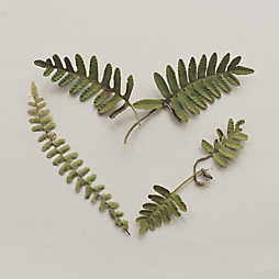 Botanical Valentines with Wyldcraft Gift Co.