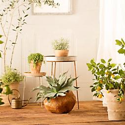 An Indoor Oasis