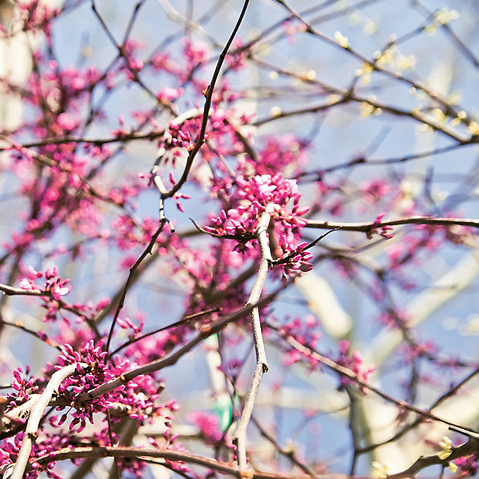 6 Things: Unusual Blooming Branches for Spring