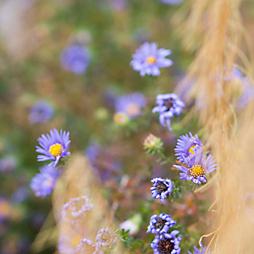 6 Garden Features for Winter Interest