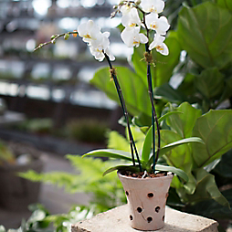 How-To: Orchid Potting + Care