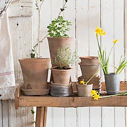 Gardener's Roundtable: Spring Plans