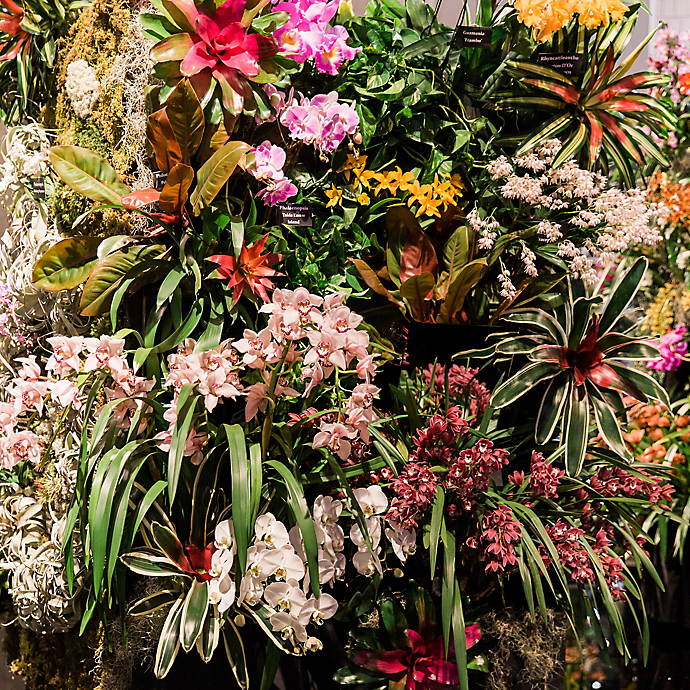 Philadelphia Flower Show Tour 2019