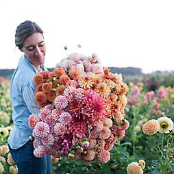 Dahlia Planting with Floret