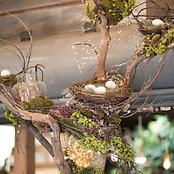 Natural Nests for Spring