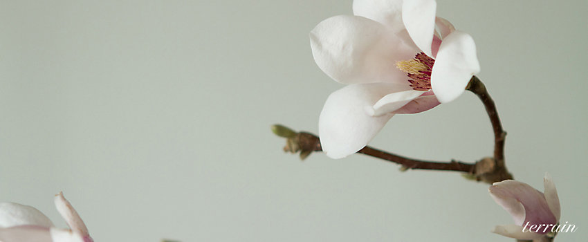 Spring Accommodation Facebook Covers: The BLOG At Terrain