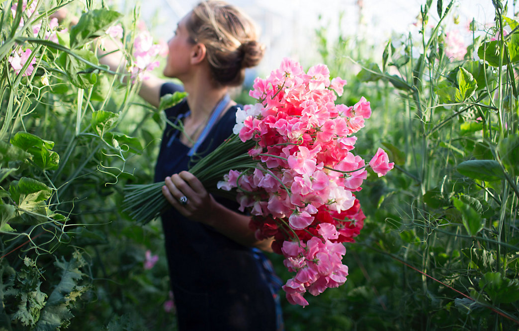 In The Field With Floret Flowers The Blog At Terrain