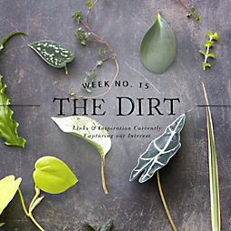 The Dirt + The Sill | 2014 | Week no. 15