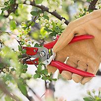Spring Pruning 101