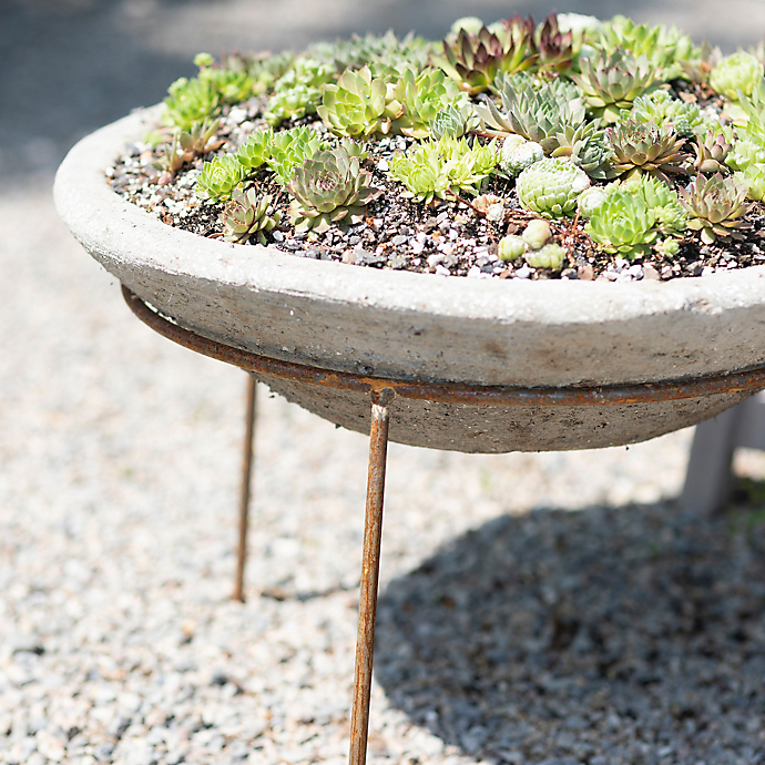 6 Things: Container Garden Trends for Spring