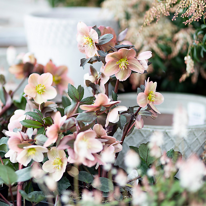 New in the Nursery: A Spring Container Planting Recipe