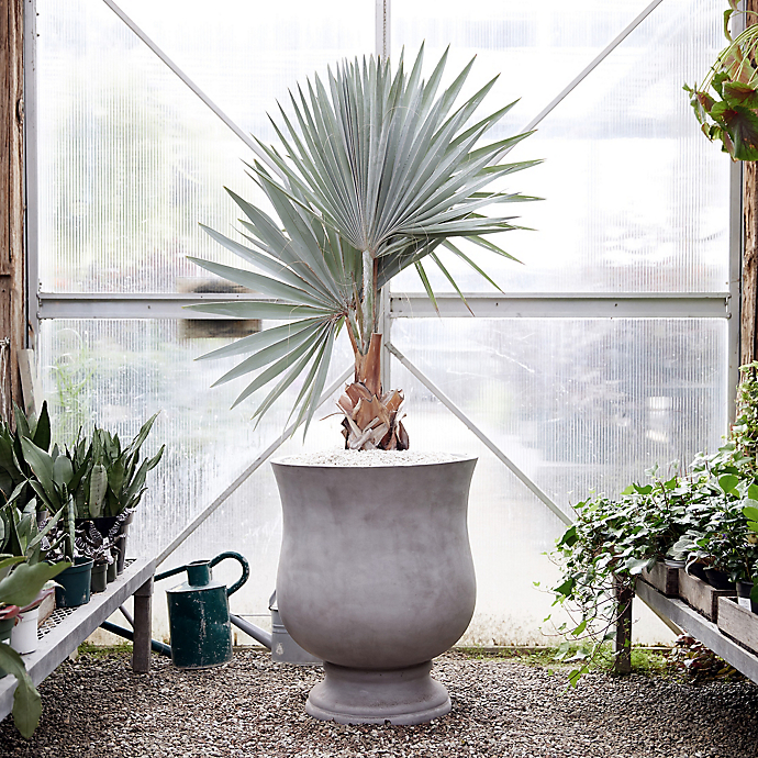 6 Things: Our Favorite Indoor Plants to Move Outdoors for Summer