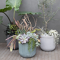 3 Monochromatic Planting Ideas