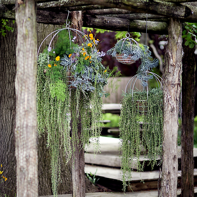 Trailing Succulents in Hanging Baskets with Beth Clevenstine