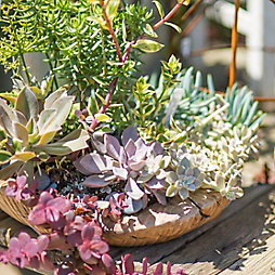 New in the Nursery: Summer Succulent Gardens