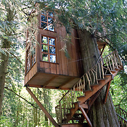 Where We've Been: The Treehouse