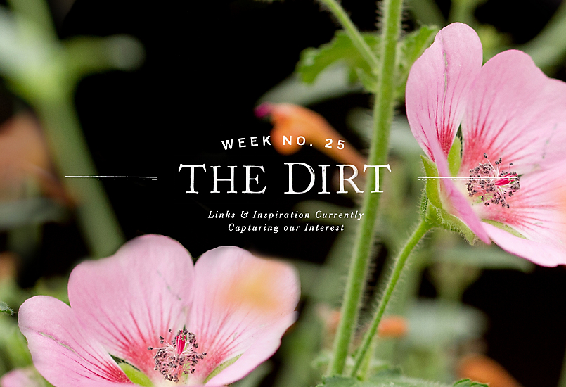 The Dirt | 2014 | week no. 25