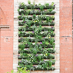 Living Walls for Summer