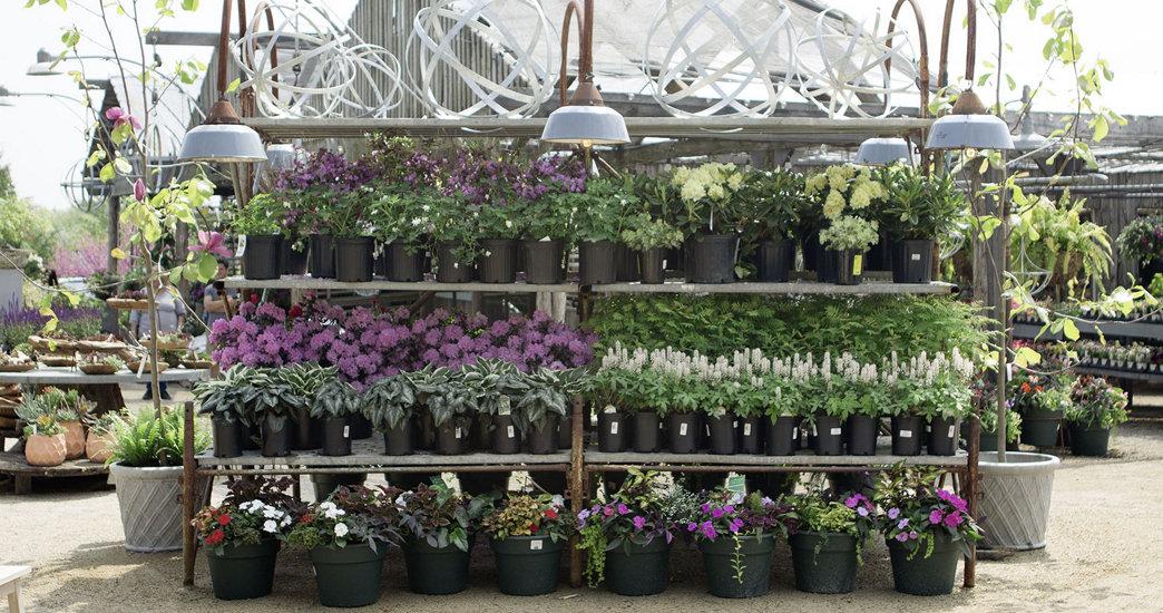 Tag + Garden Sale: Nursery Savings