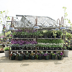 Tag + Garden Sale: Nursery Savings