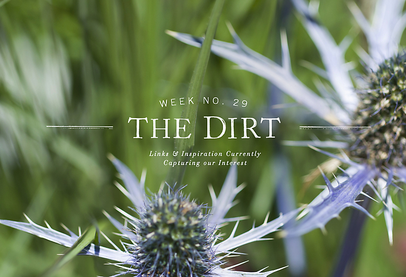 The Dirt | 2014 | week no. 29