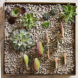 How-To: Rooting Succulents in Habit + Form