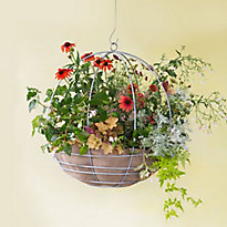 How-to: high summer hanging baskets