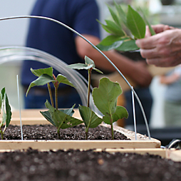 A Propagating Workshop with the Barnes Arboretum