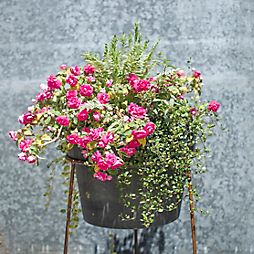 3 Summer Planter Recipes