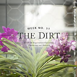 The Dirt | 2014 | week no. 31