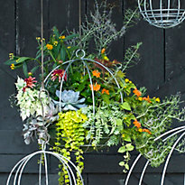 Simple Tips for Hanging Baskets