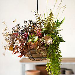 Specimen Guide: Our Early Autumn Hanging Basket