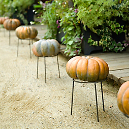 Five Favorites: Decorating with Pumpkins