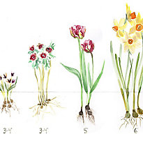 Our bulb planting guide