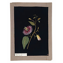 A peek into botanical art history