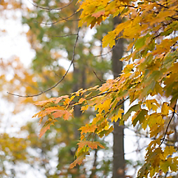 Fall Foliage Predictions