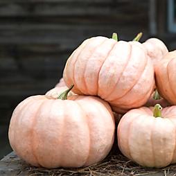 A Pumpkin Primer