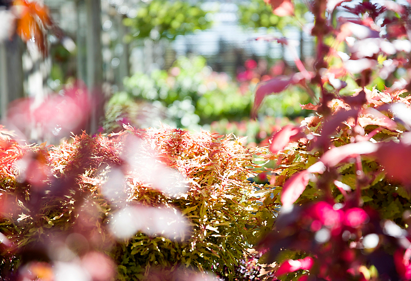 Ask Our Experts: Fall Gardening Tips