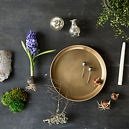Watch: A Blooming Bulb Centerpiece