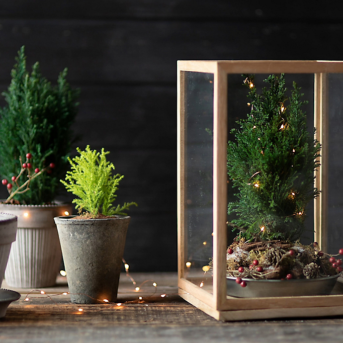 Terrain the Book: Conifers Under Glass
