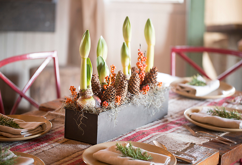 Design by Terrain: A Fall-to-Holiday Centerpiece